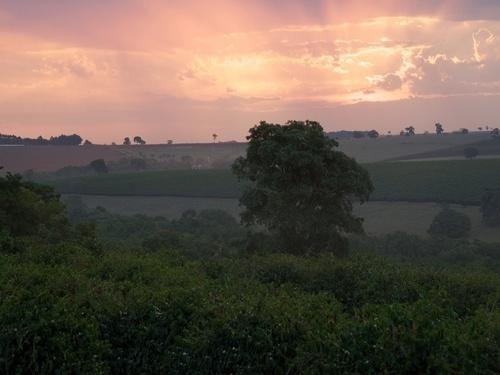 Peru Amazonas - Aprocoyce Coffee Cooperative - Arabica